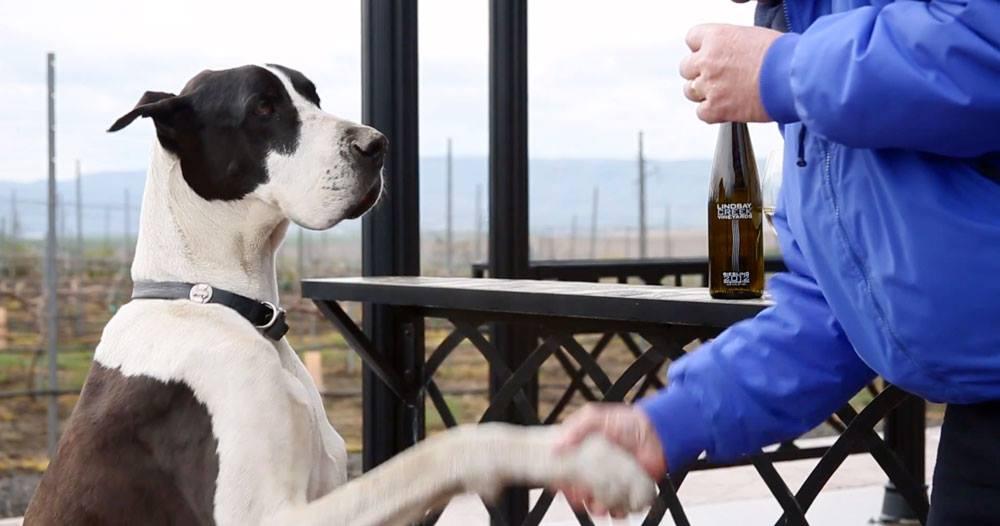 Idaho-Wine-Documentary